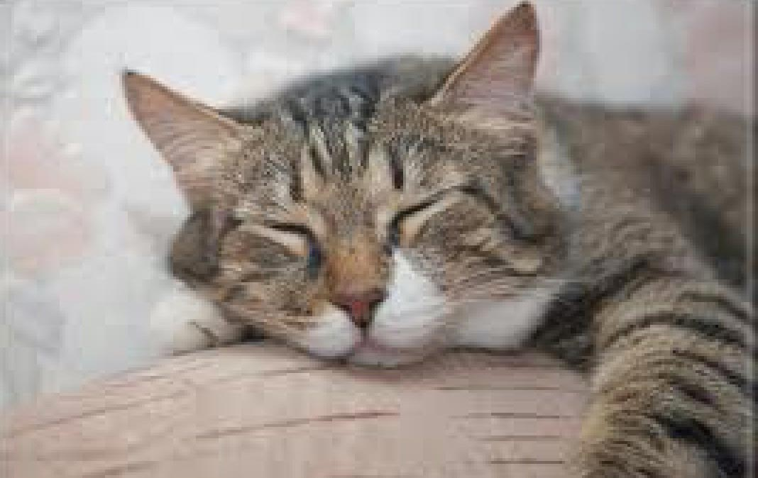 """Featured image for """"Sleeping Cats & Dogs!"""""""
